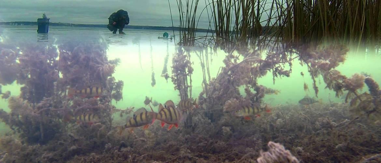 Лучшие камеры для подводной рыбалки