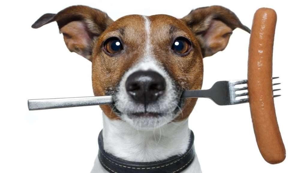 Фото собаки и корма