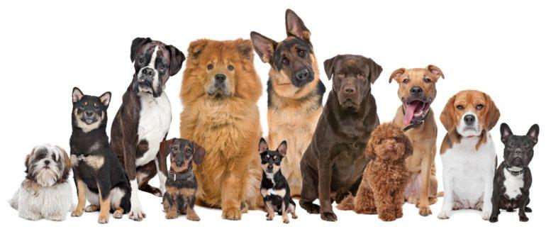 Как выбрать корм для любимой собаки?
