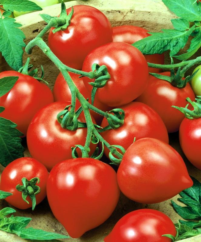 Семена томат «Моя любовь F1» фото