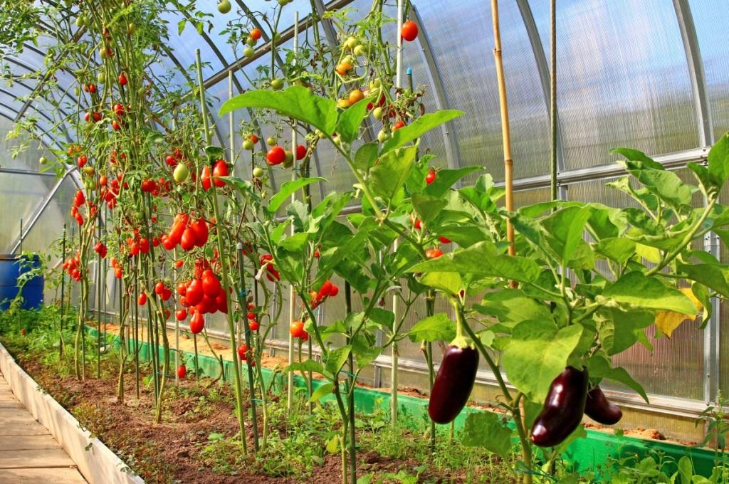 Как выбирать теплицу для урожая?