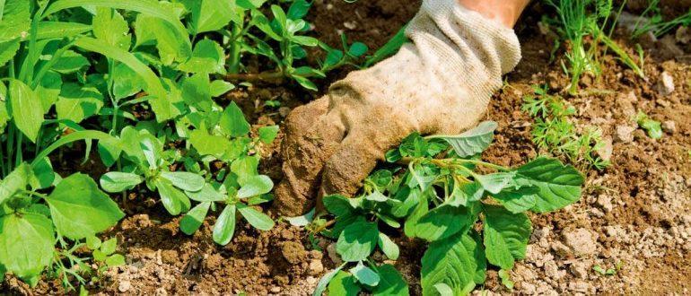 Как бороться с сорняками и травой на участке?