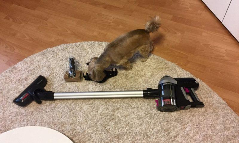Пылесос ковер и собака