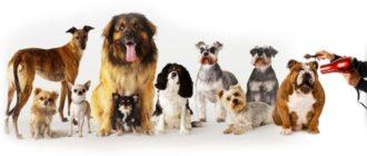 Выбираем самую хорошую машинку для стрижки собак