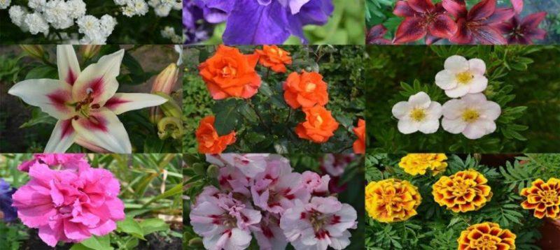 Однолетние цветы - самые красивые