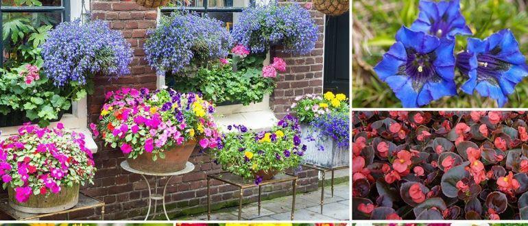 Выбираем самые хорошие однолетние цветы