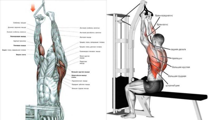 Подтягивания или тяга вертикального блока