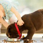 Собака в доме и квартире- лучшие породы