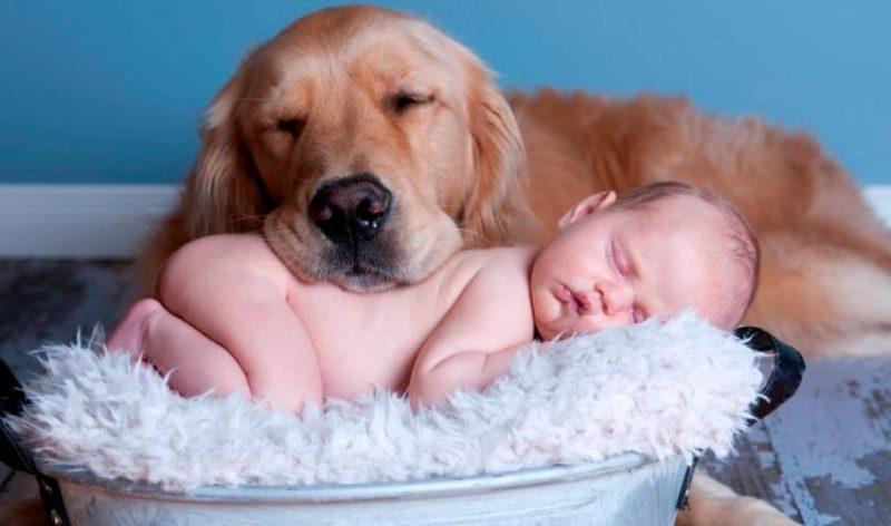 Выбираем хорошую породу собак для дома и ребенка