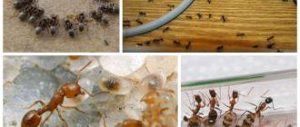Выбираем самое лучшее средство от муравьев дома и в саду