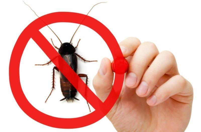 Как избавиться от тараканов дома и в квартире