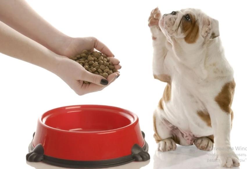 Накладываем корм собаке