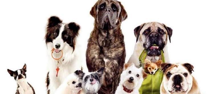 Выбираем корм для собак класса холистик