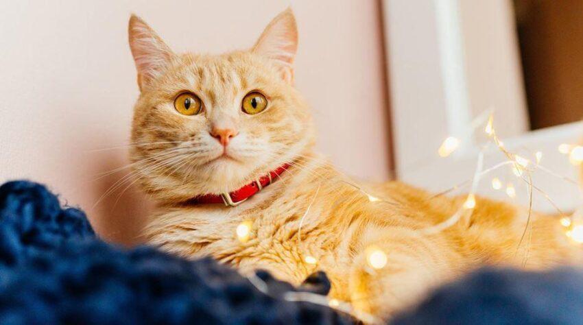 Как правильно добавлять лакомства в рацион домашней кошки?