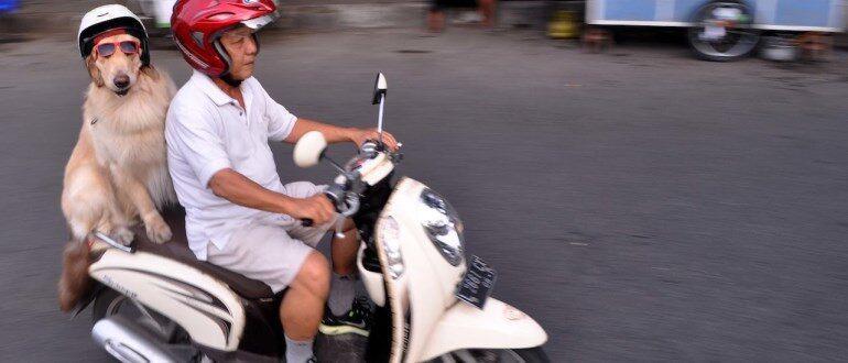 ТОП самых дешевых скутеров