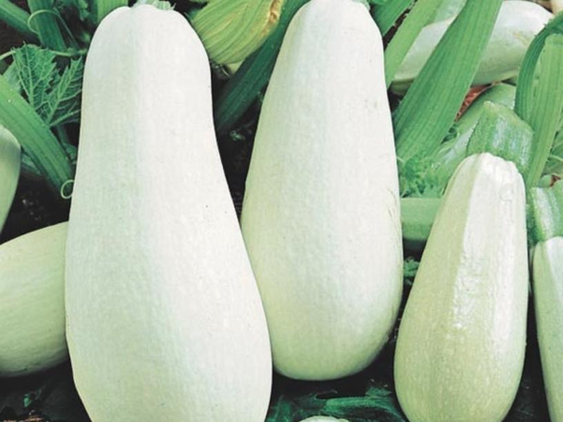 Белоплодные фото