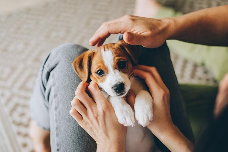 Как выбрать лучшую породу собаки