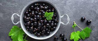 Рейтинг самых хороших сортов черной смородины